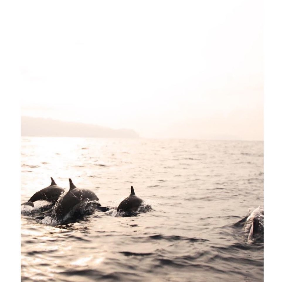 The Komodo Liveaboard Chaser: Dolphins!