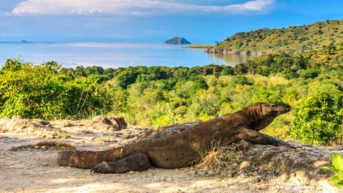 Komodo Liveaboard: A Journey of Fantastic Animals and Where to Find Them