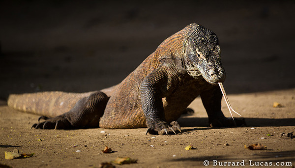 Camera Photography Tips for Spectacular Shoot in Komodo Island